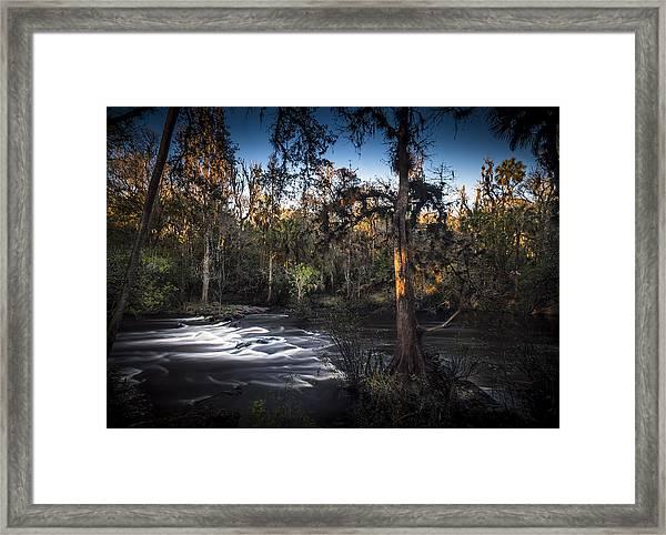 Wild Florida Framed Print