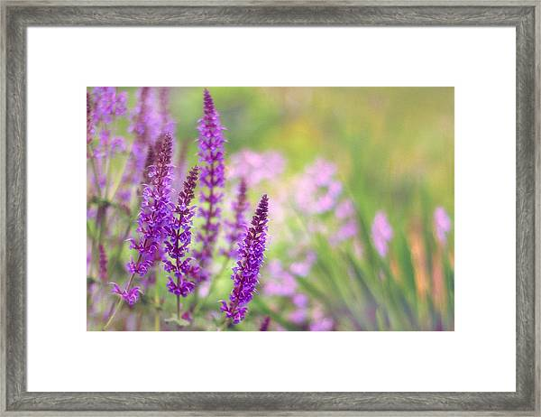 Wild Flower Framed Print