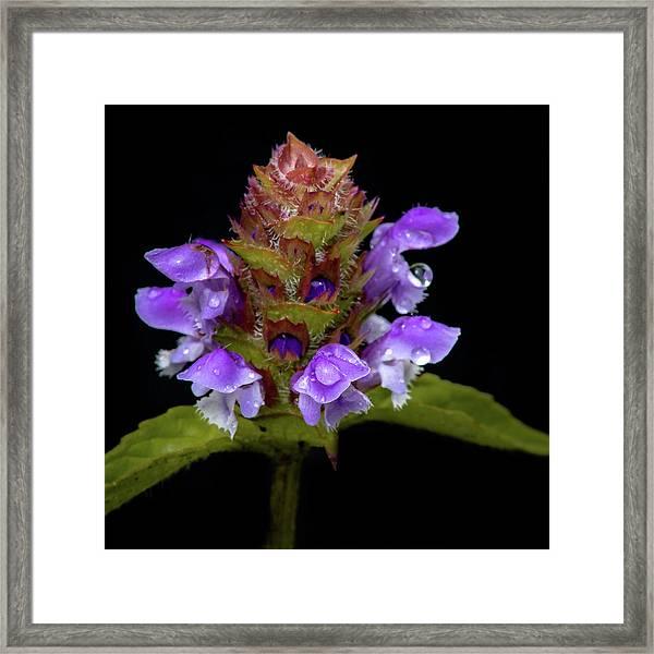 Wild Flower Portrait Framed Print
