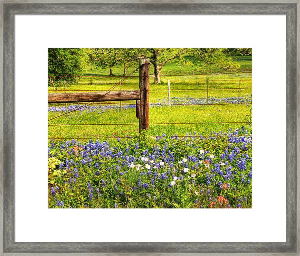 Wild Flowers And A Fence Framed Print
