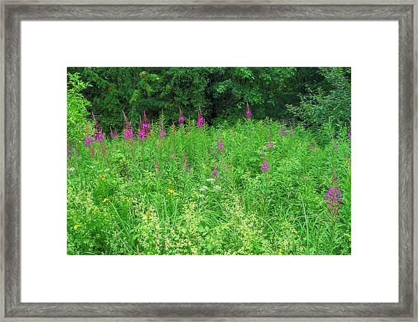Wild Flowers And Shrubs In Vogelsberg Framed Print