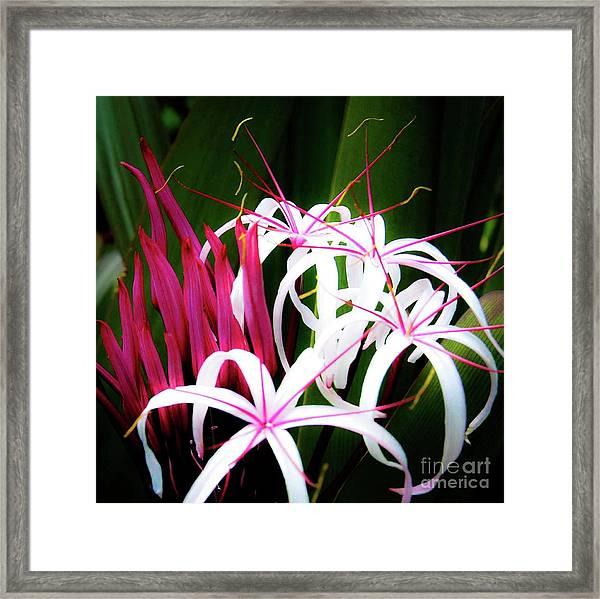 Wild Flowers In Hawaii Framed Print