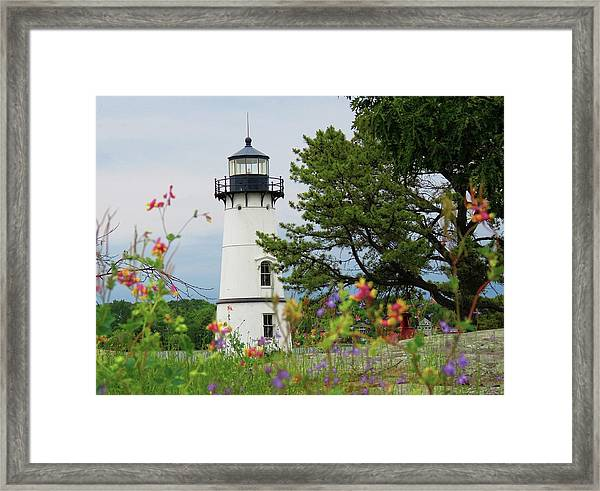 Wild Flowers On Rock Island Framed Print