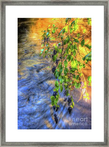 Wild Grapes Framed Print