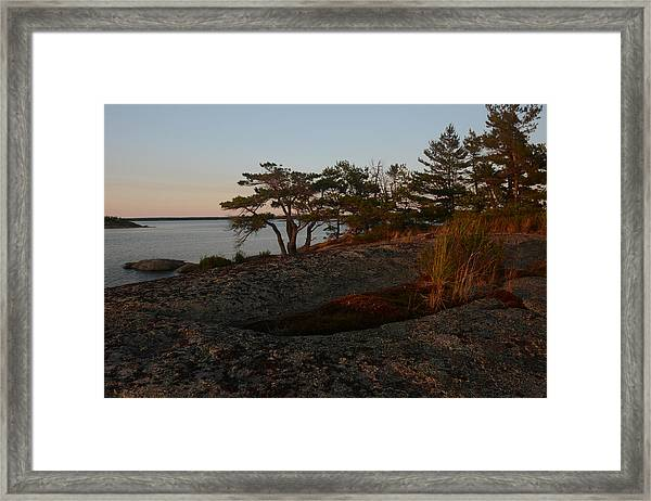 Wild Grass At Sunset - Georgian Bay Framed Print