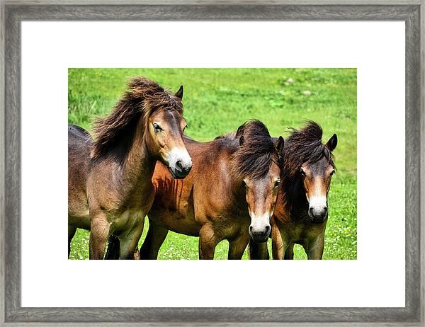 Wild Horses 2 Framed Print
