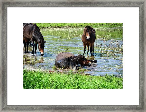 Wild Horses 3 Framed Print
