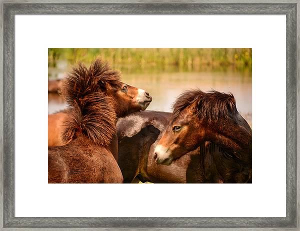 Wild Horses 5 Framed Print