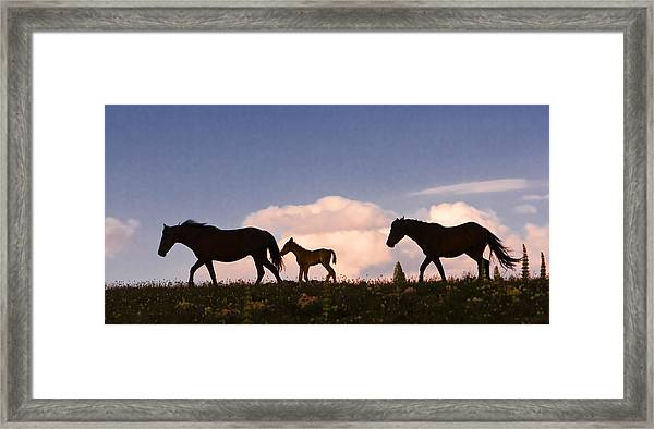 Wild Horses And Clouds Framed Print