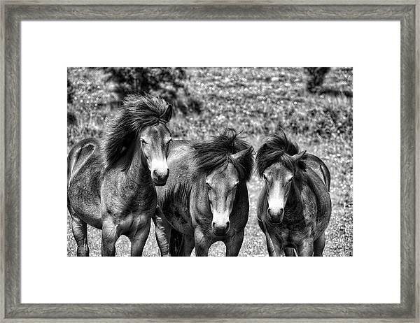 Wild Horses Bw1 Framed Print