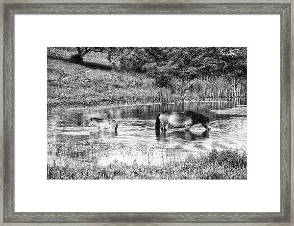 Wild Horses Bw2 Framed Print
