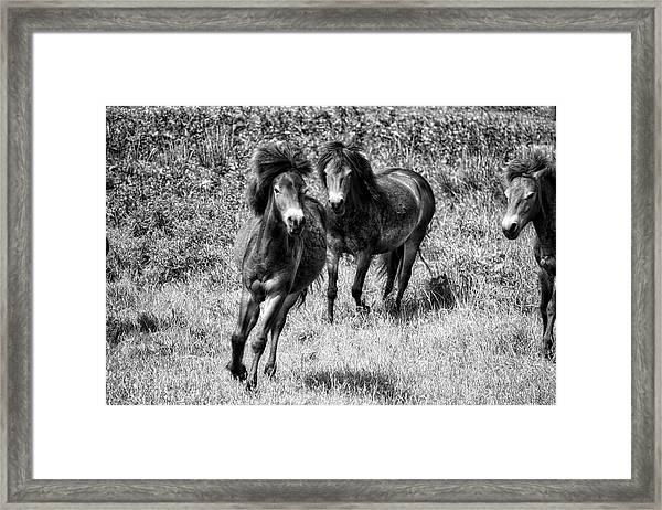 Wild Horses Bw4 Framed Print