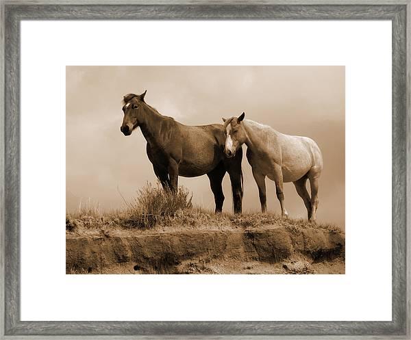 Wild Horses In Western Dakota Framed Print