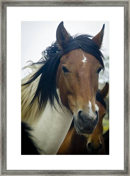 Framed Print featuring the photograph Wild Horses Of Nevada 1 by Catherine Sobredo