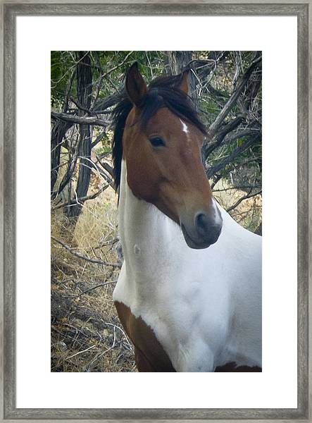 Framed Print featuring the photograph Wild Horses Of Nevada 2  by Catherine Sobredo