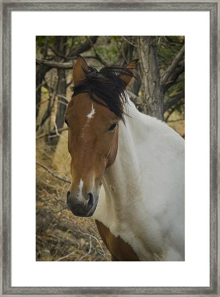 Framed Print featuring the photograph Wild Horses Of Nevada 3 by Catherine Sobredo
