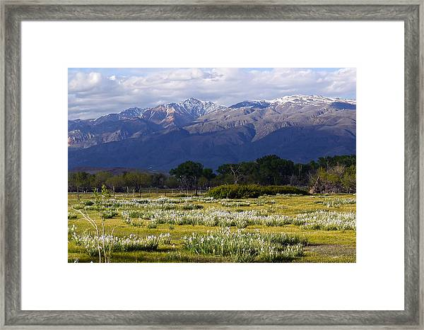 Wild Iris And The White Mountains Framed Print