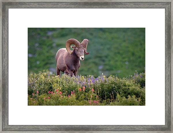Wild Journey Framed Print