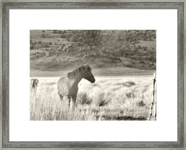 Wild Mustang Of Adobe Valley Eastern Sierra Framed Print