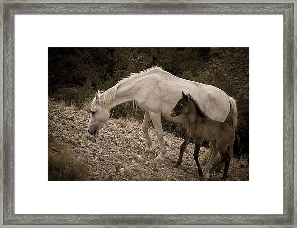 Wild Mustangs Of New Mexico 22 Framed Print