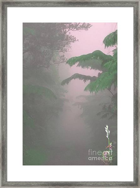 Wild Orchid In Volcano Mist Framed Print by Uldra Patty Johnson