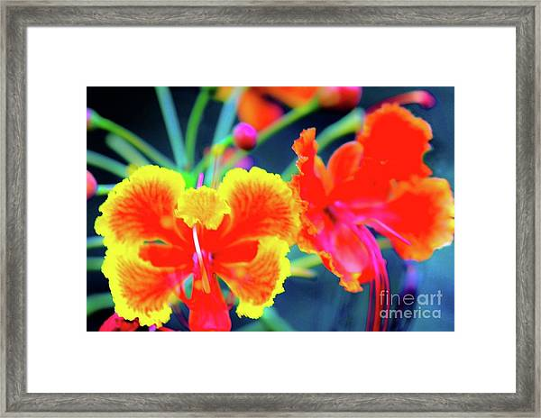 Wild Orchids In Hawaii Framed Print