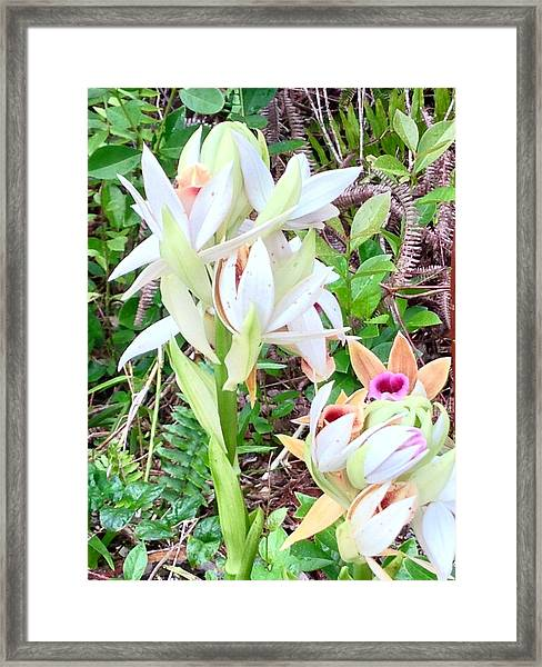 Wild Orchids In Pastel 2 Framed Print