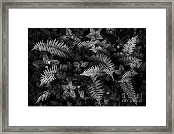 Wild Plants Framed Print