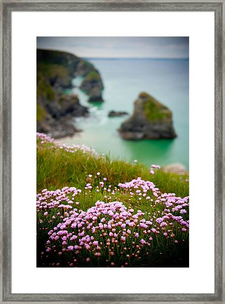 Wild Sea Pinks In Cornwall Framed Print
