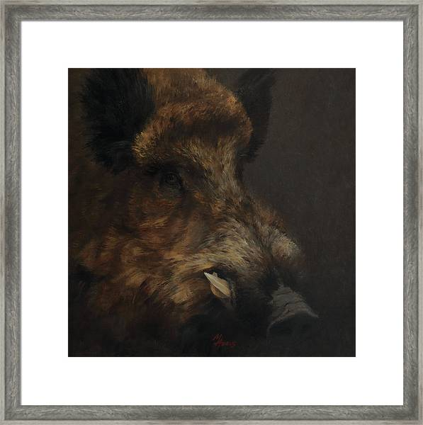 Wildboar Portrait Framed Print