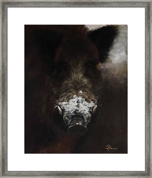 Wildboar With Snowy Snout Framed Print