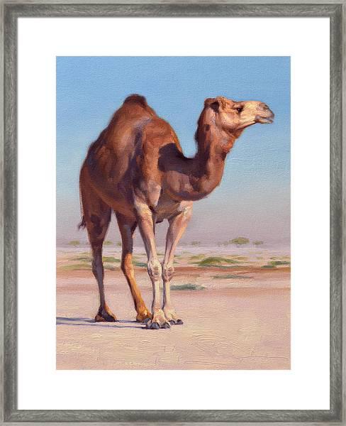 Wilderness Camel Framed Print