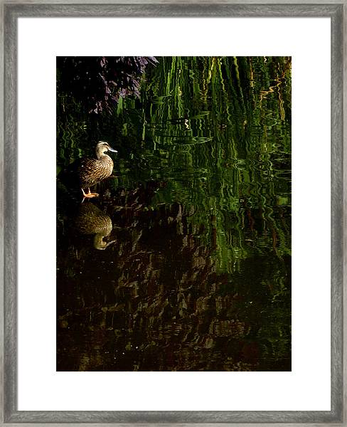 Wilderness Duck Framed Print