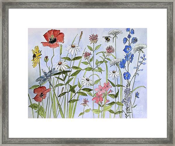 Wildflower And Blue Sky Framed Print