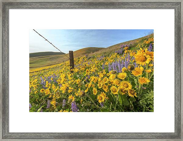Wildflower Bonanza Framed Print