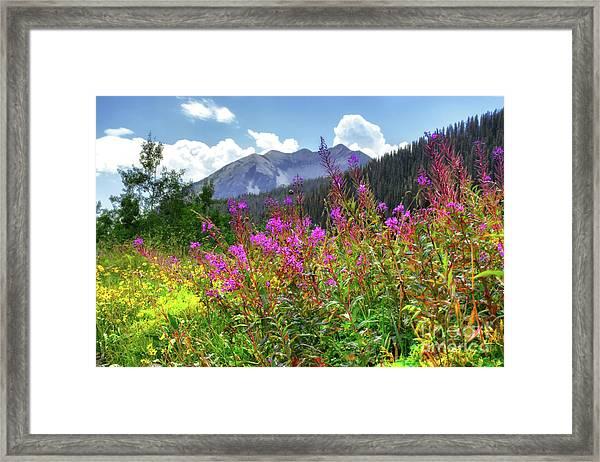 Wildflower Capital Framed Print