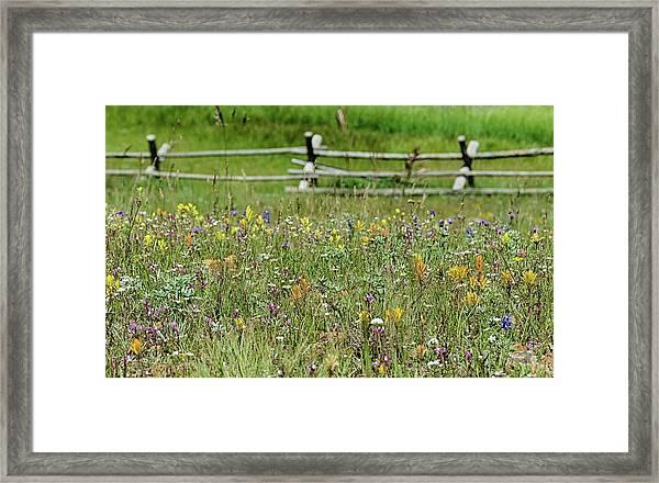 Wildflower Fence Framed Print
