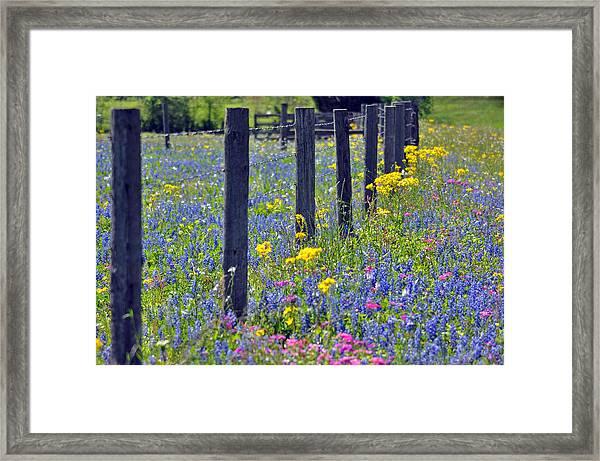 Wildflower Fenceline Framed Print by Teresa Blanton