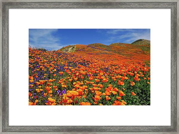 Wildflower Jackpot Framed Print