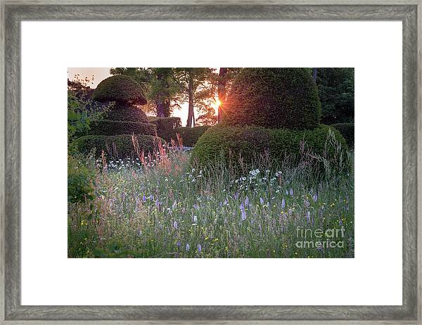 Wildflower Meadow At Sunset, Great Dixter Framed Print