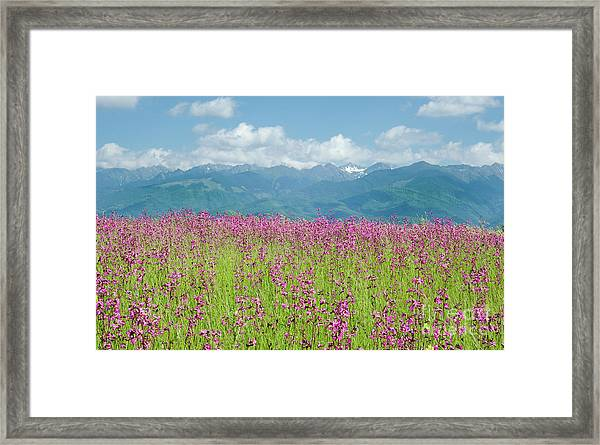 Wildflower Meadows And The Carpathian Mountains, Romania Framed Print