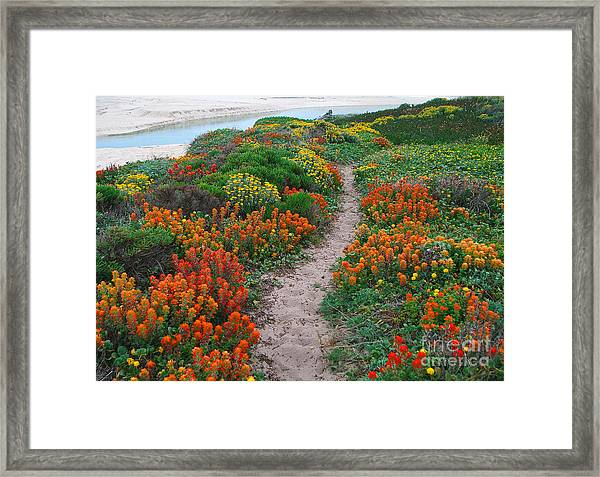 Wildflower Path At Ribera Beach Framed Print