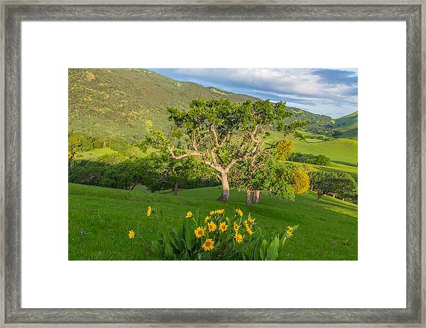 Wildflowers Above Round Valley Framed Print