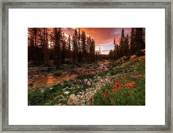 Wildflowers Along The Provo River. Framed Print by Johnny Adolphson