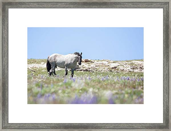Wildflowers And Mustang Framed Print