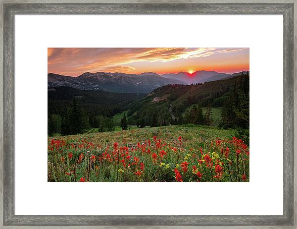 Wildflowers At Gaurdsmans Pass Framed Print