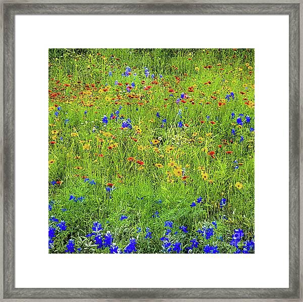 Wildflowers In Bloom Framed Print by D Davila