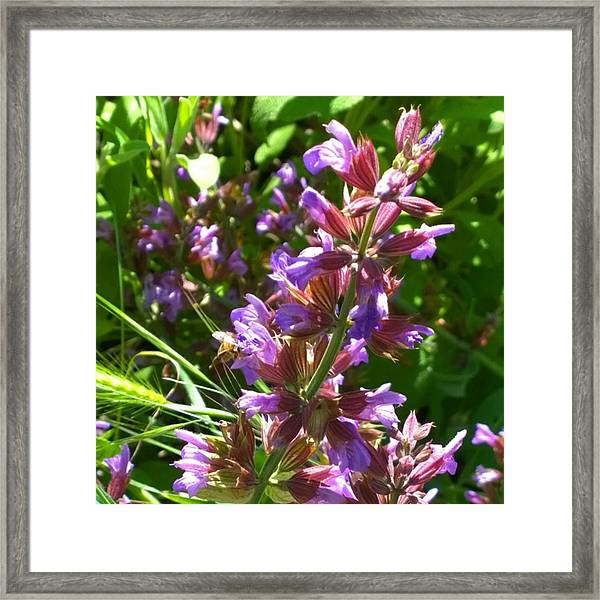 #wildflowers In #purple #country Framed Print