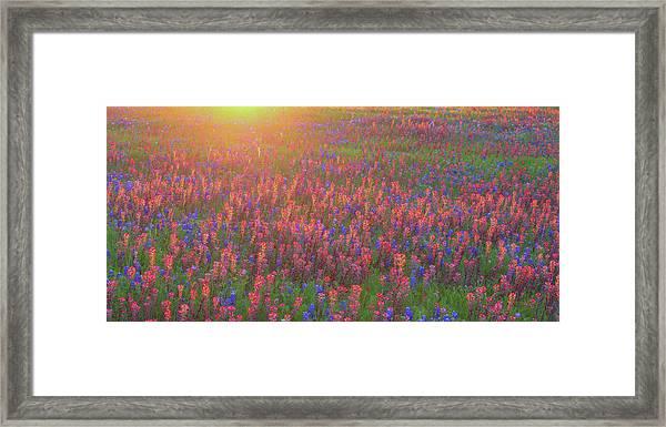 Wildflowers In Texas Framed Print
