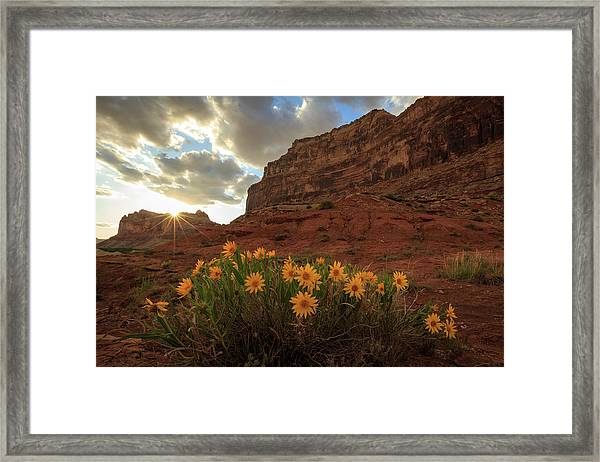 Wildflowers In The Swell. Framed Print